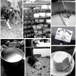 Marca Trevigiana Blogtour AIFB: una giornata presso la Malga Molvine Binot (giorno 2)